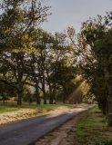 piket-bo-berg road